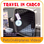 Pet On Airplanes Safety Video Series