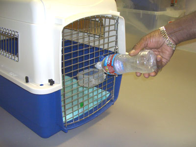 Dog Crate Food And Water Dish