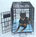 Metal Wire Crate Pet Carrier