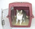Cat trip to vet office
