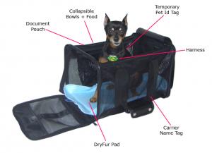 Charmant In Cabin Pet Airline Checklist