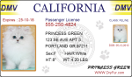 Pet ID DMV Drivers License
