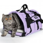 Cat Carrier Airline Approved