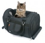 Cat Airline Carrier
