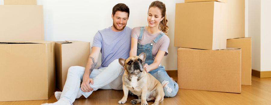 Moving with Pet Dogs & Cats